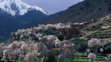 Active Treks Morocco - Atlas excursion 03
