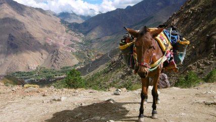 Active Treks Morocco - Atlas Mountains escape 02