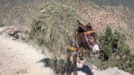 Active Treks Morocco - Berber villages trekking