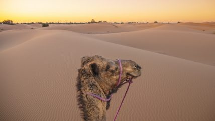 Active Treks Morocco - Mountains and dunes of Morocco